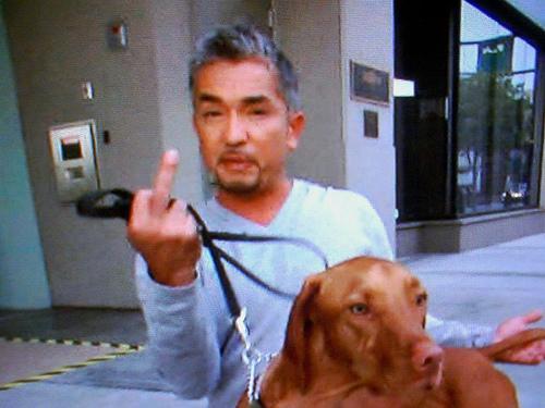 Dog whisperer fail