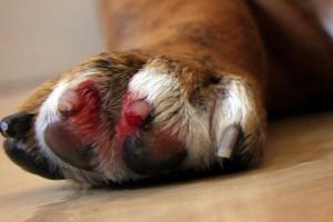 How Deep Is A Dog S Toenails Pics