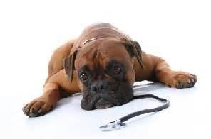 Normal Dog Temperature Rrruffhouse Dog Training Belleville Ontario